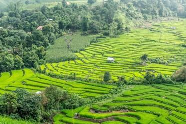 Viaggi Chiang Rai & Chiang Mai