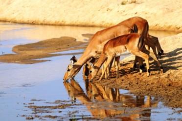 Viaggi Le meraviglie della Namibia