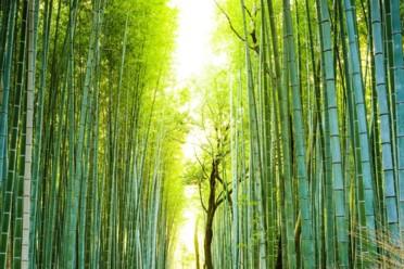 Viaggi Giappone alternativo