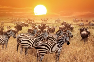 Viaggi Safari Tanzania - Magic Ngorongoro
