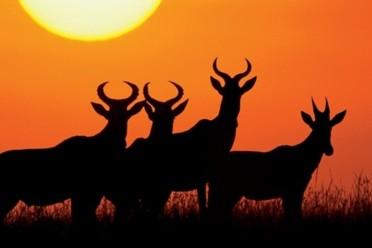 Viaggi Safari in Tanzania