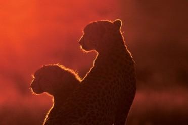 Viaggi Safari Classico   Dongwe Club