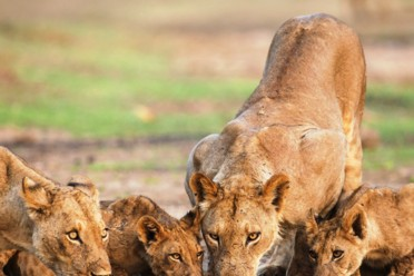 Viaggi Wild Africa