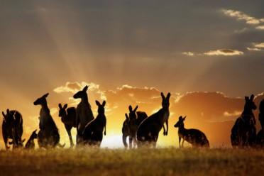 Viaggi Terra Australis