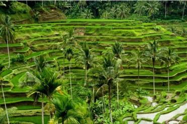 Viaggi Alla scoperta di Bali