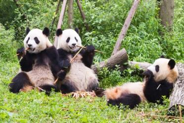 Viaggi Nel regno del panda