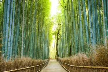 Viaggi Easy Tokyo & Kyoto
